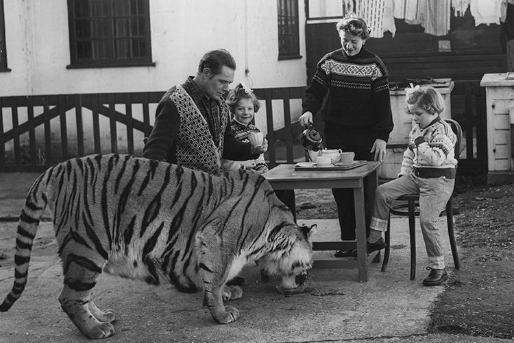 Tea for tiger