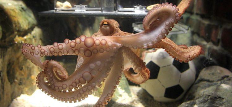 Paul the Octopus > Paul Scholes